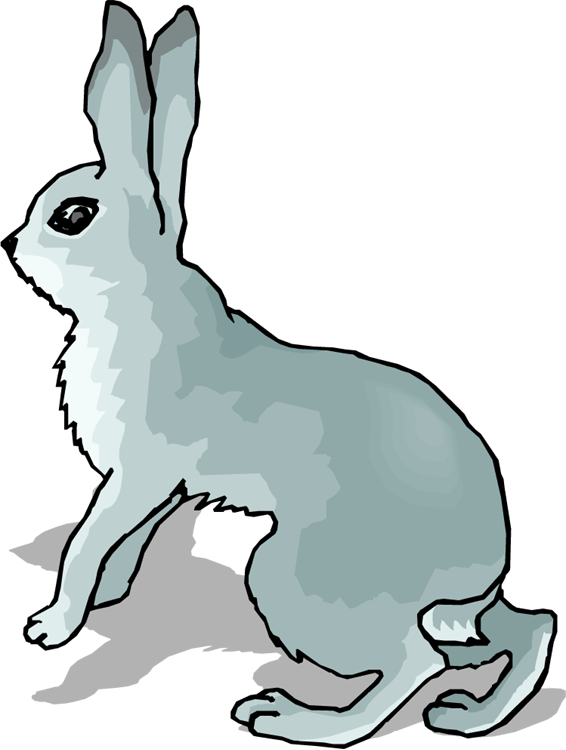 566x750 Grey Rabbit Clipart
