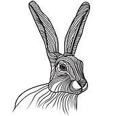 170x170 Top 96 Jackrabbit Clip Art