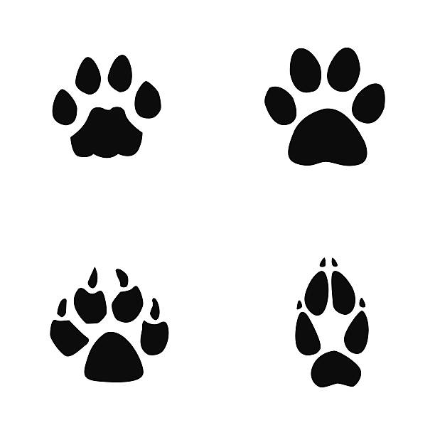 612x612 Jaguar Clipart Footprint