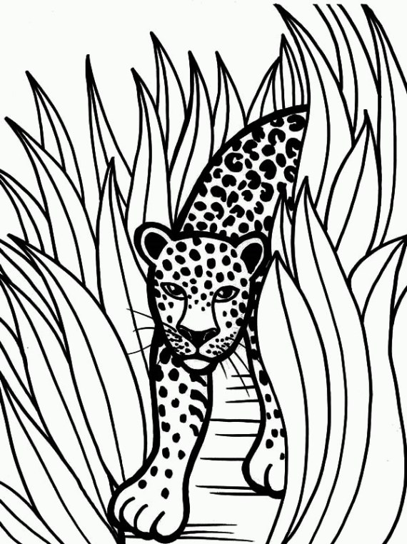 570x762 Good Jaguar Coloring Pages 42 In Coloring For Kids With Jaguar