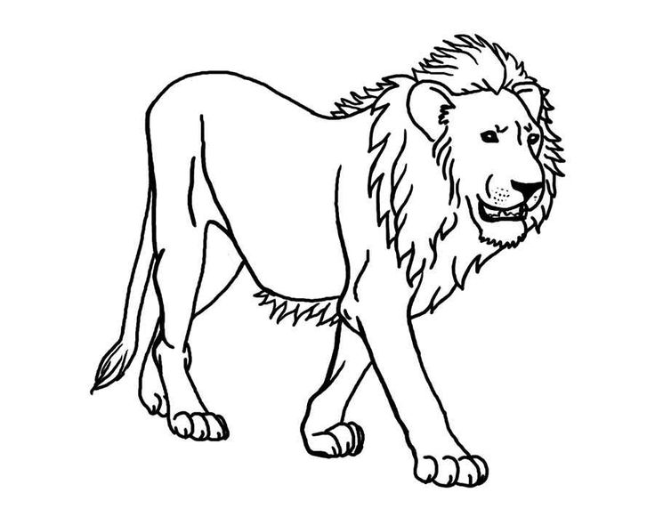 736x572 22 Best Lion Coloring Pages Images Dieren