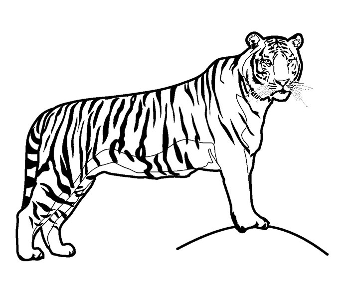 700x576 70 Animal Colouring Pages Free Download Amp Print Premium