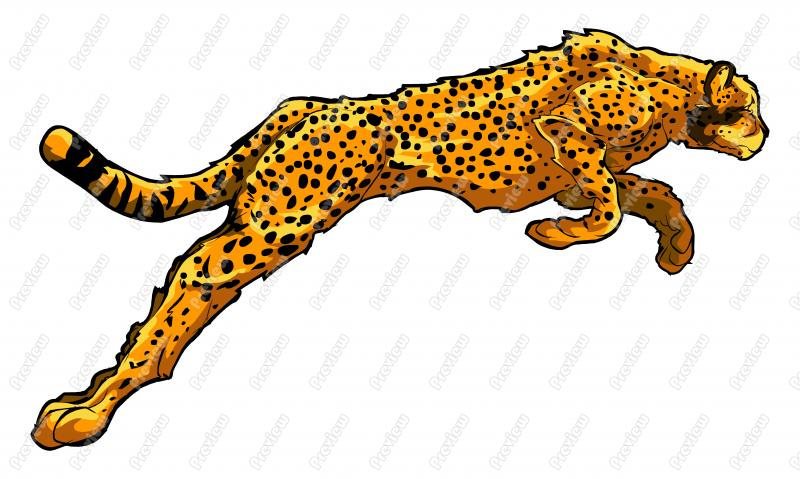 800x479 Cheetah Cartoon Clipart