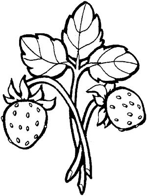 300x400 42 Best Strawberry Coloring Pages Images Branches