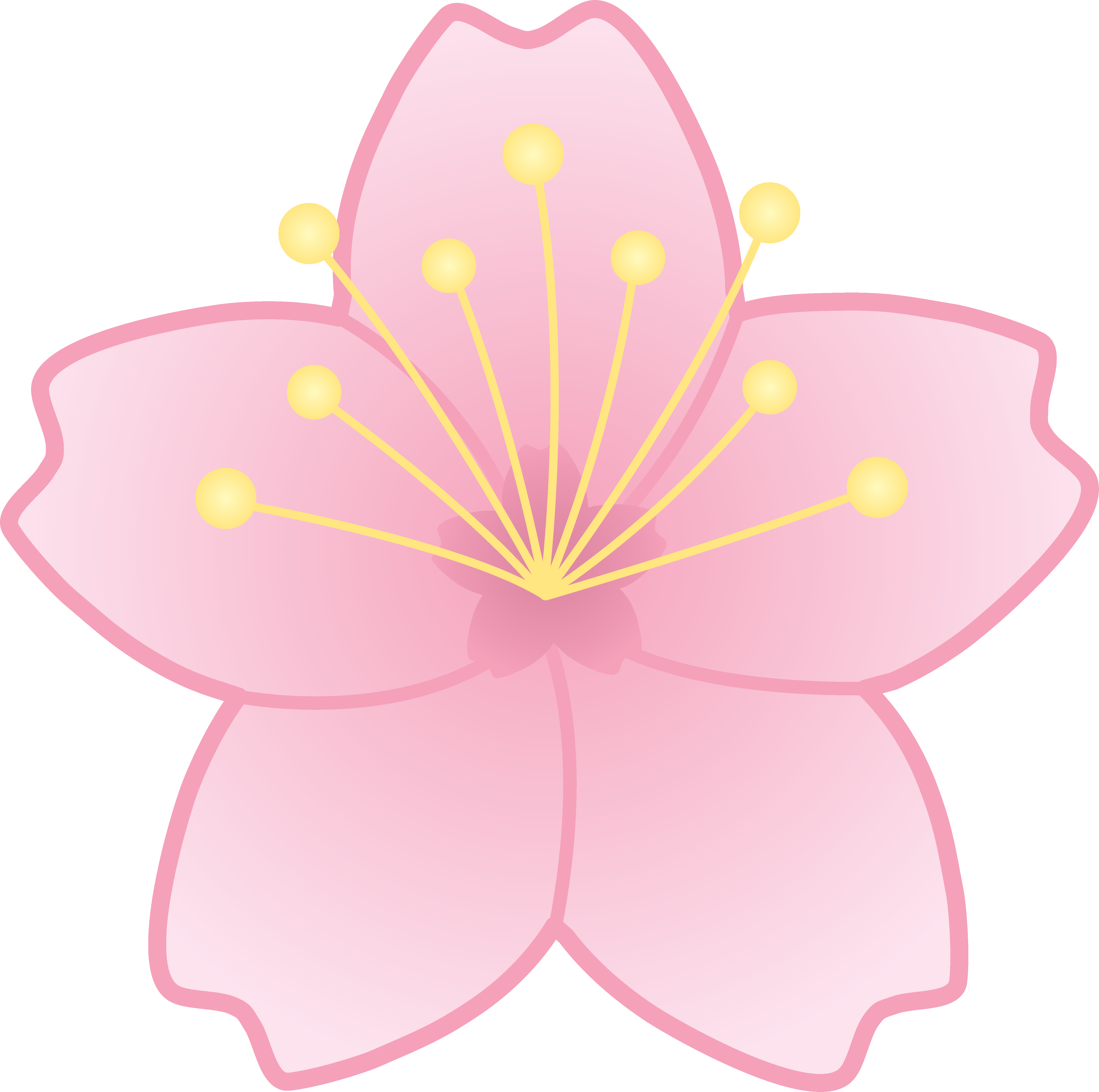 5063x5032 Pink Cherry Blossom Flower