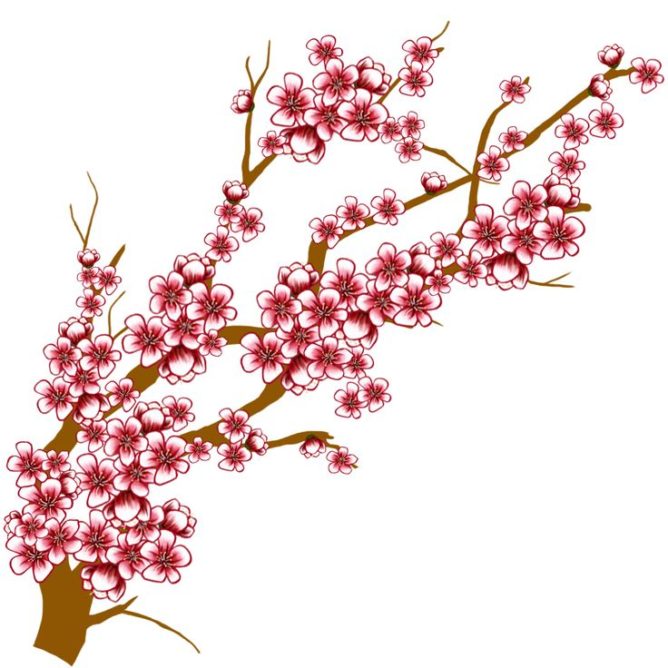 736x736 Pictures Cherry Blossom Drawings Clip Art,