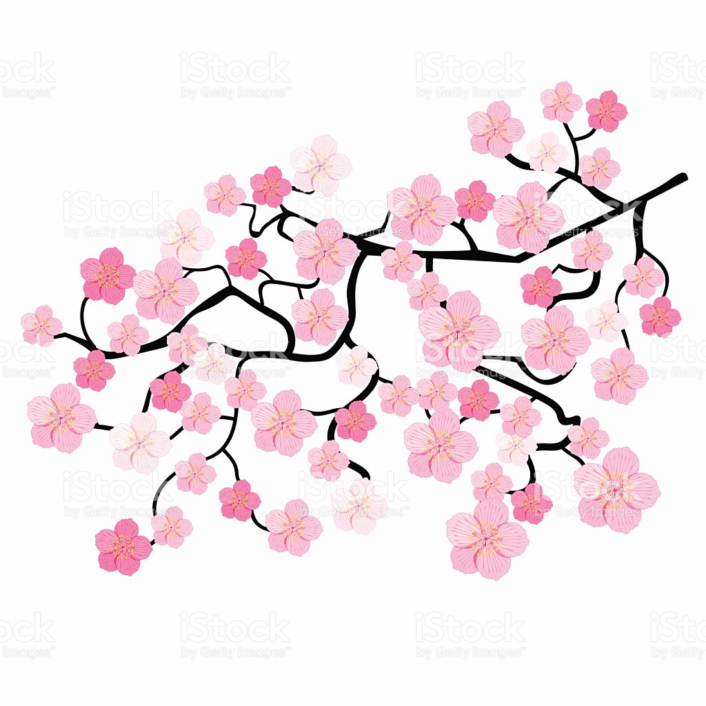 1024x1024 Ume Blossom Clipart Japanese Drawing