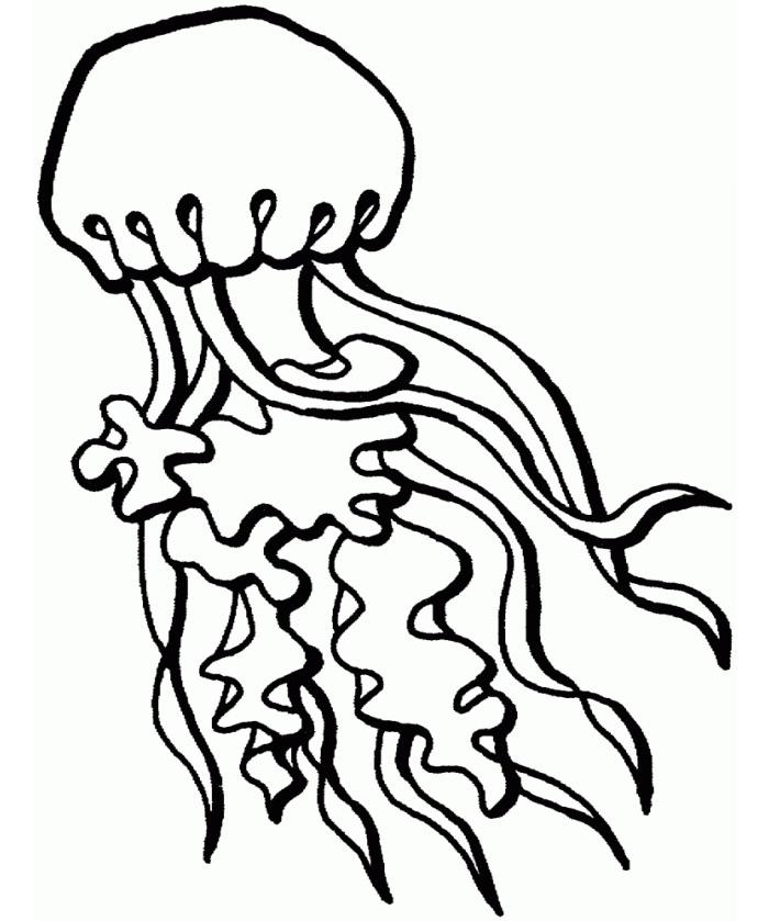Jellyfish Outline
