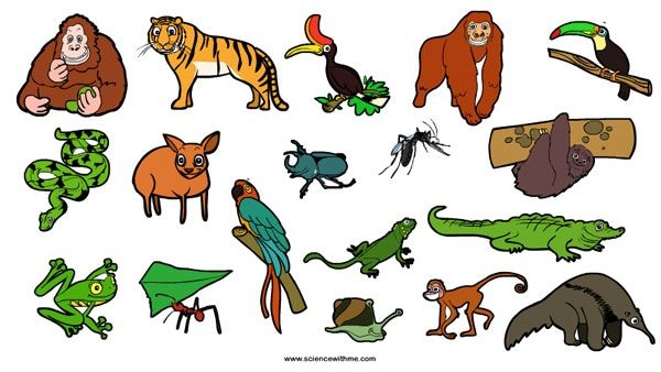 600x338 Animal Clipart Rainforest Pencil And In Color Animal
