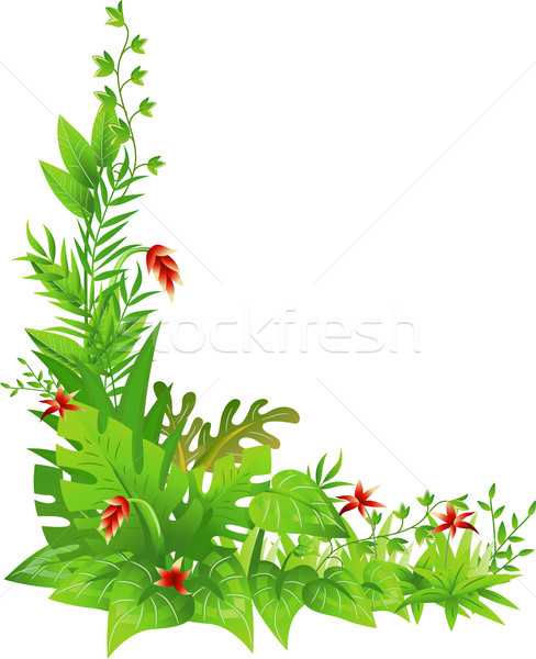 488x600 Jungle Border Stock Photos, Stock Images And Vectors Stockfresh