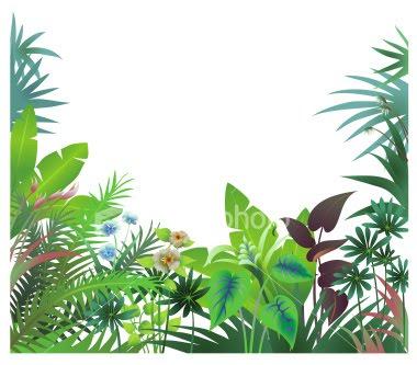 380x333 Rainforest Clipart Border