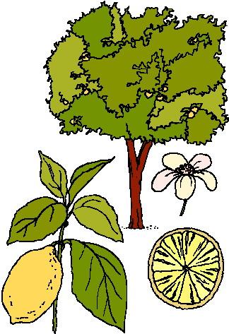 324x473 Trees Jungle Tree Clipart Kid