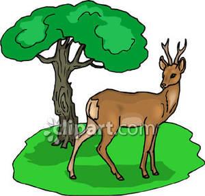 300x286 Top 82 Forest Clip Art