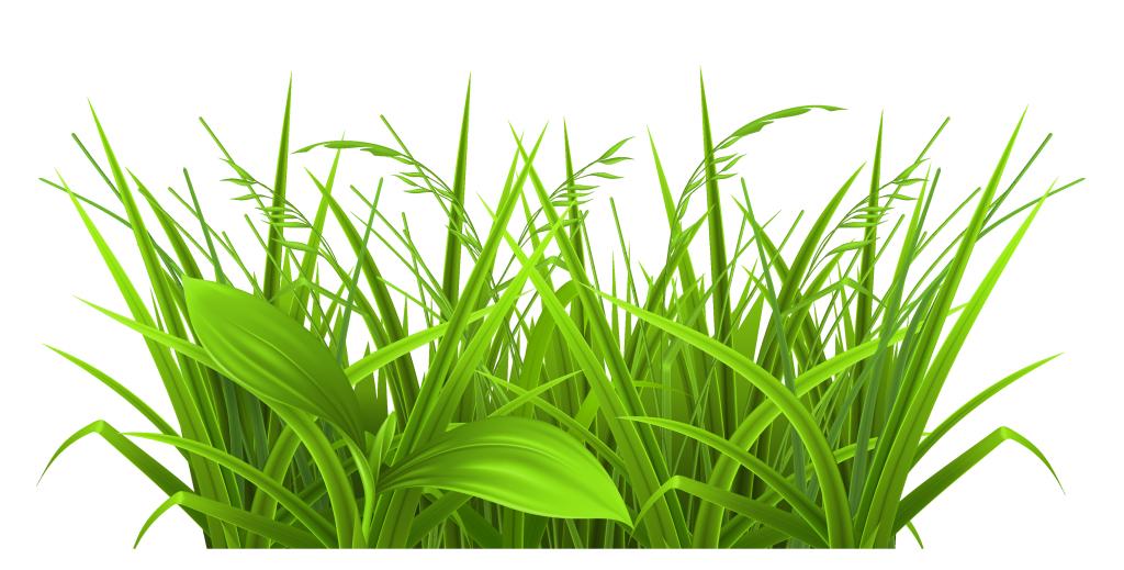 1024x519 Rainforest Clipart Jungle Grass