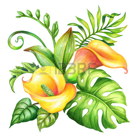 450x450 Watercolor Botanical Illustration, Wild Yellow Tropical Flowers