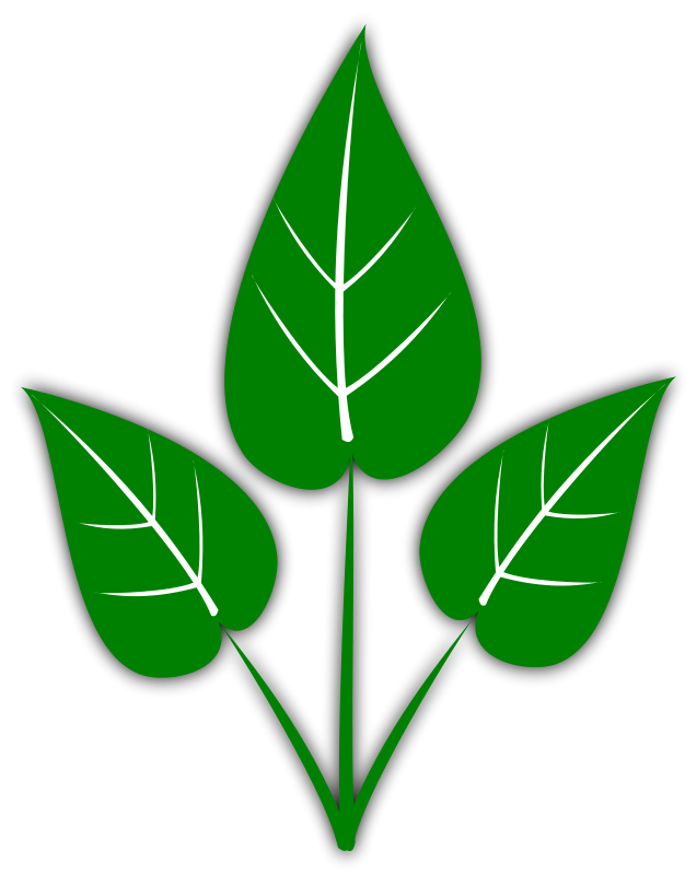 637x800 Leaf Leaves Clip Art Image