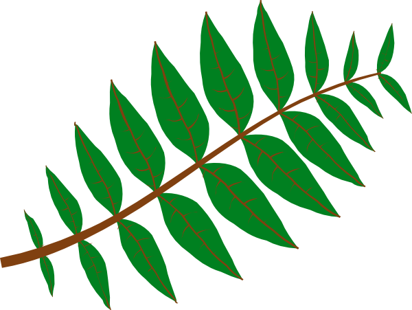 600x451 Pinnate Leaf Clip Art
