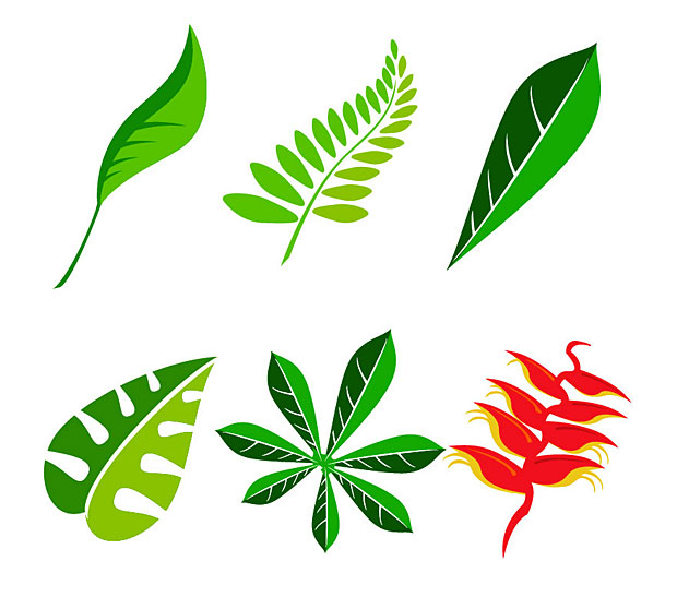 620x547 Foliage Clipart Jungle Leaves