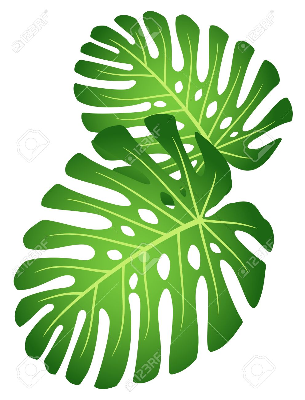 992x1300 Foliage Clipart Tropical Plant