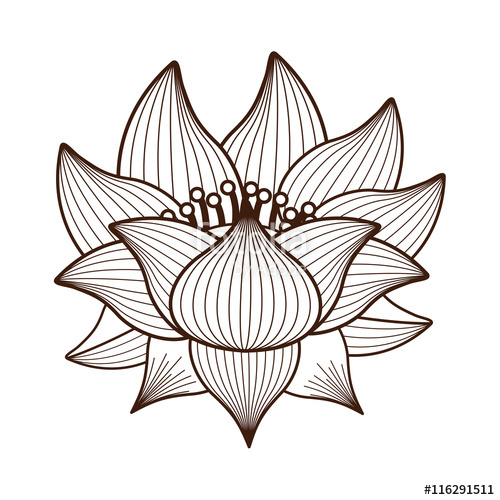 Kamal flower clipart free download best kamal flower clipart on 500x500 graphics for lotus drawing graphics mightylinksfo