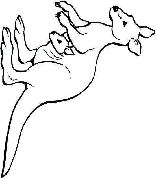 540x614 Kangaroo Coloring Pages Free Kids Area Trend Ideas For Your