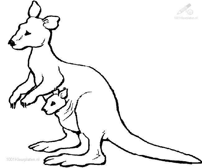 650x542 Popular Kangaroo Coloring Pages Cool Ideas