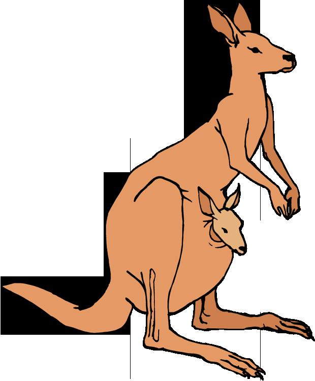 620x750 Young Mom Kangaroo Clipart