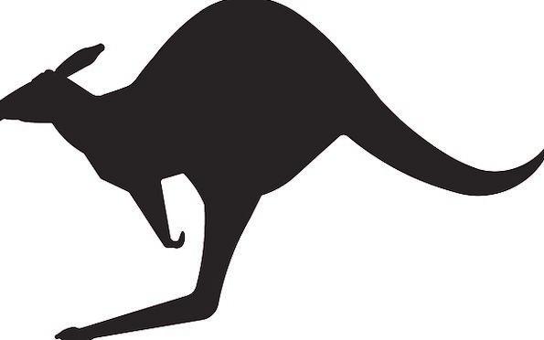 595x372 Kangaroo, Jerk, Physical, Australia, Animal, Jump, Hurdle