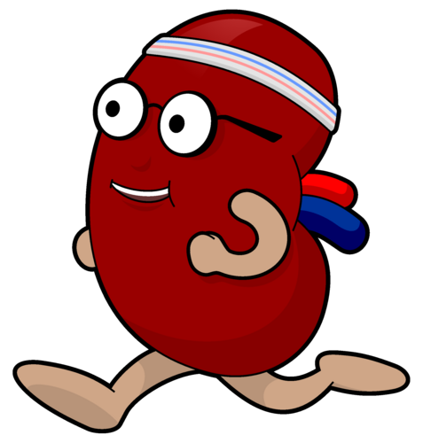 477x500 Sick Kidney Clipart Amp Sick Kidney Clip Art Images