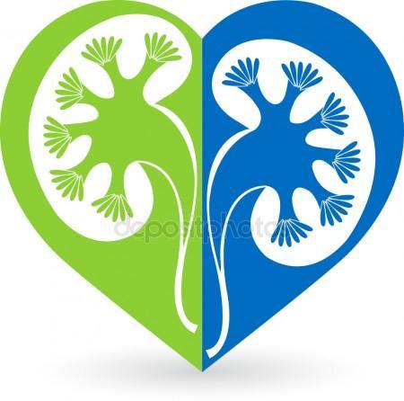 450x446 Kidney Stock Vectors, Royalty Free Kidney Illustrations