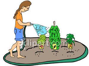 300x224 Veggie Garden Clipart