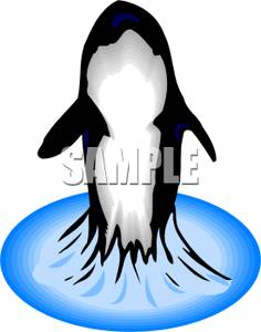 236x300 Killer Whale Jumping Out Of The Water Clip Art Image