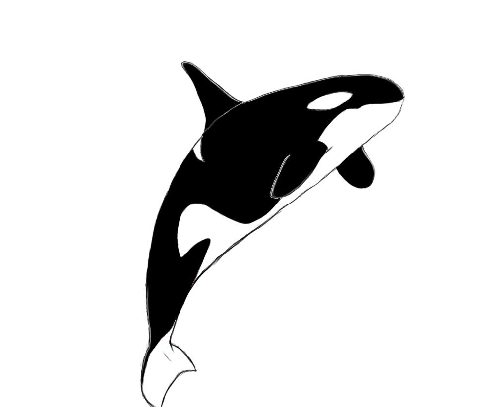 970x822 Orca Killer Whale Clipart 2