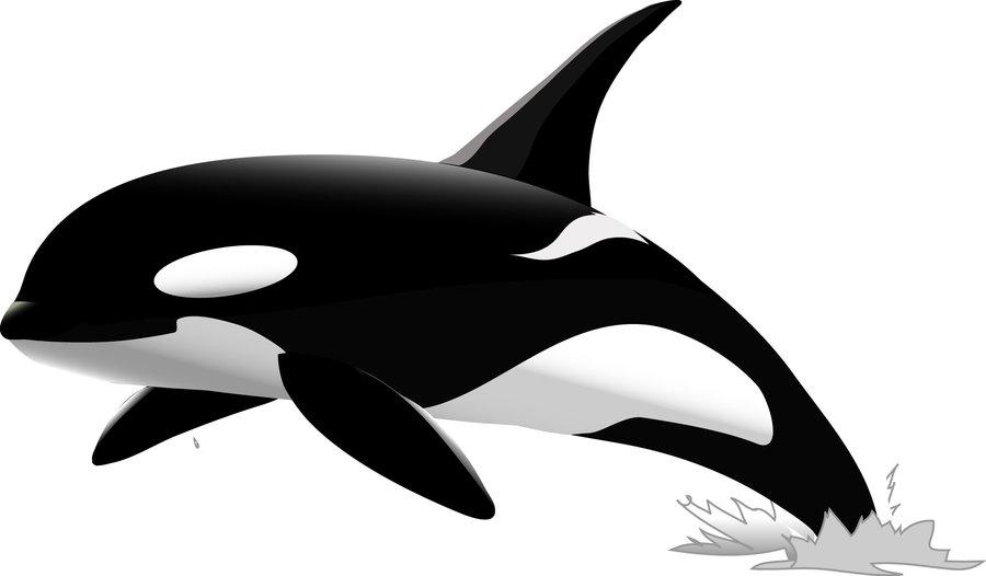 900x526 Top 88 Orca Clip Art