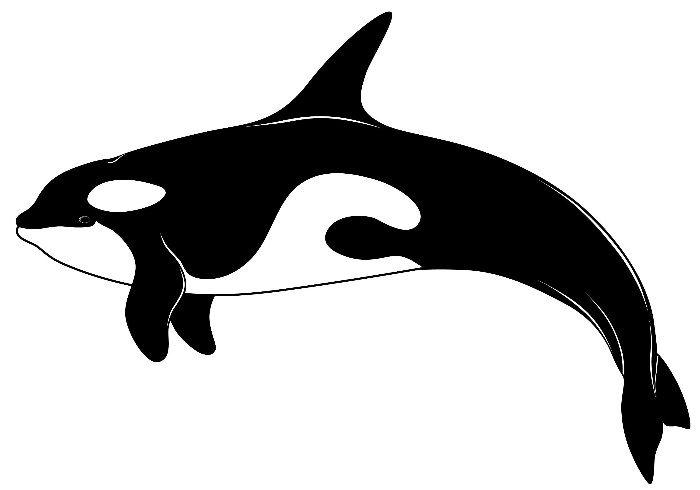 3000x2100 Top 88 Orca Clipart