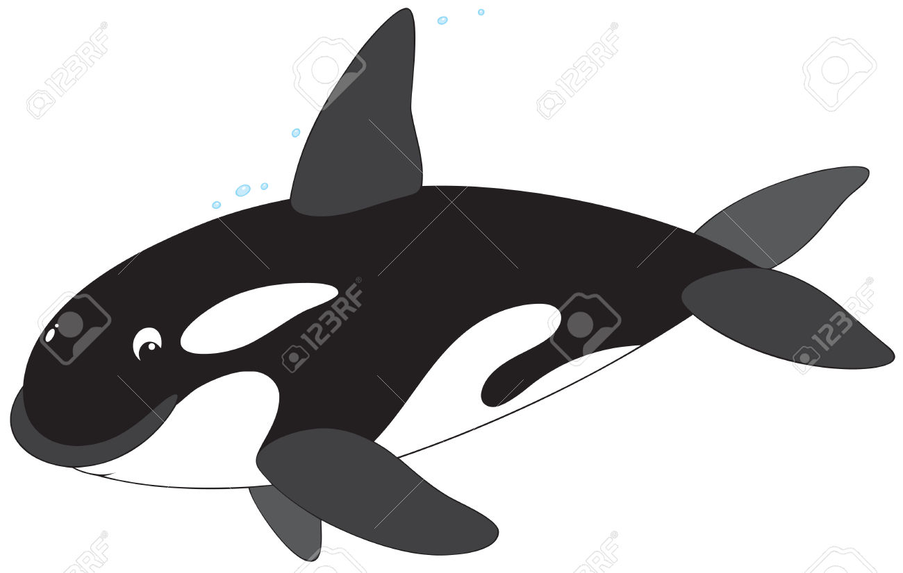 1300x826 Top 91 Orca Clip Art