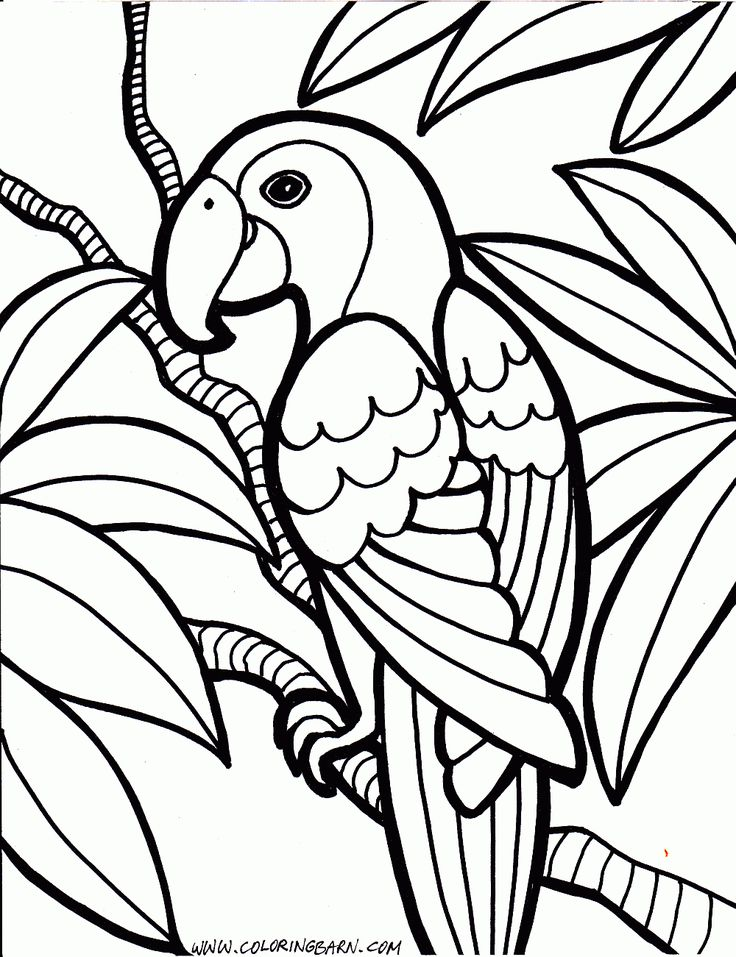 736x957 Best Bird Coloring Pages Ideas Bird By Bird Pdf