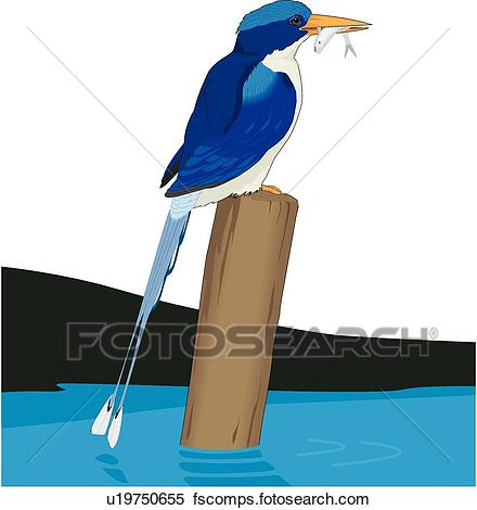 440x470 Clipart Of Paradise Kingfisher U19750655