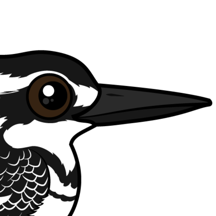 440x440 Cute Pied Kingfisher By Birdorable Lt Meet The Birds