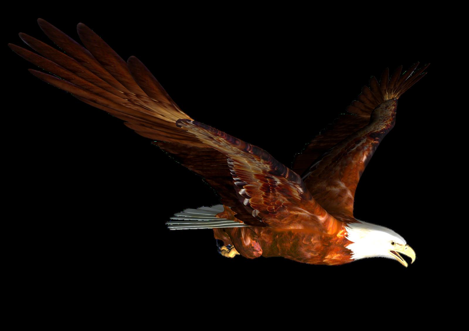 1600x1131 Bird Of Prey Clipart Transparent