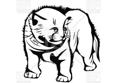 400x282 Frightened Kitten
