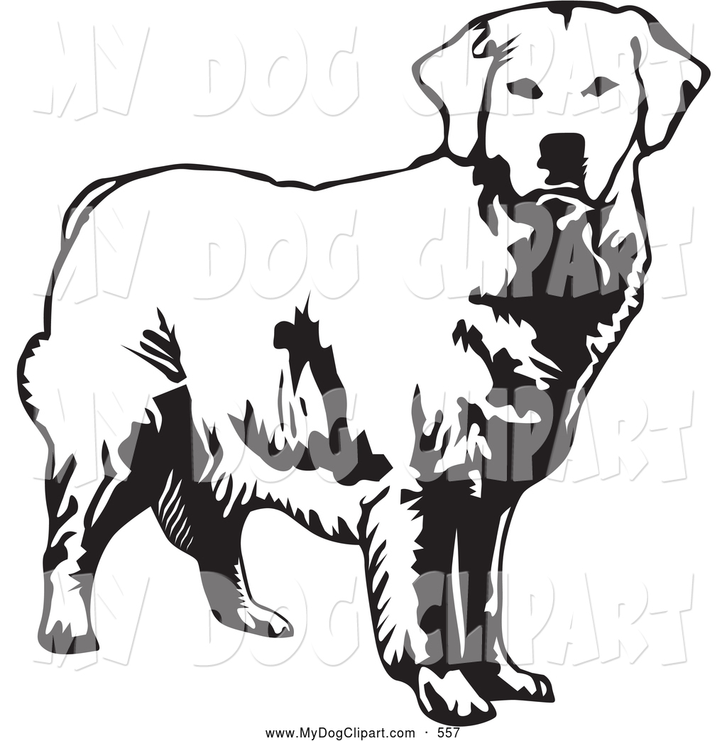 1024x1044 Clip Art Of A Happy Alert Golden Retriever Dog Looking Forward