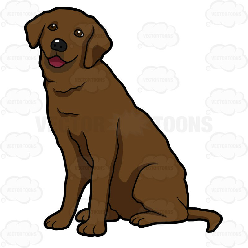 800x800 Happy Looking Chocolate Labrador Sitting Cartoon Clipart