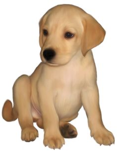 236x308 Dog Png Images Images