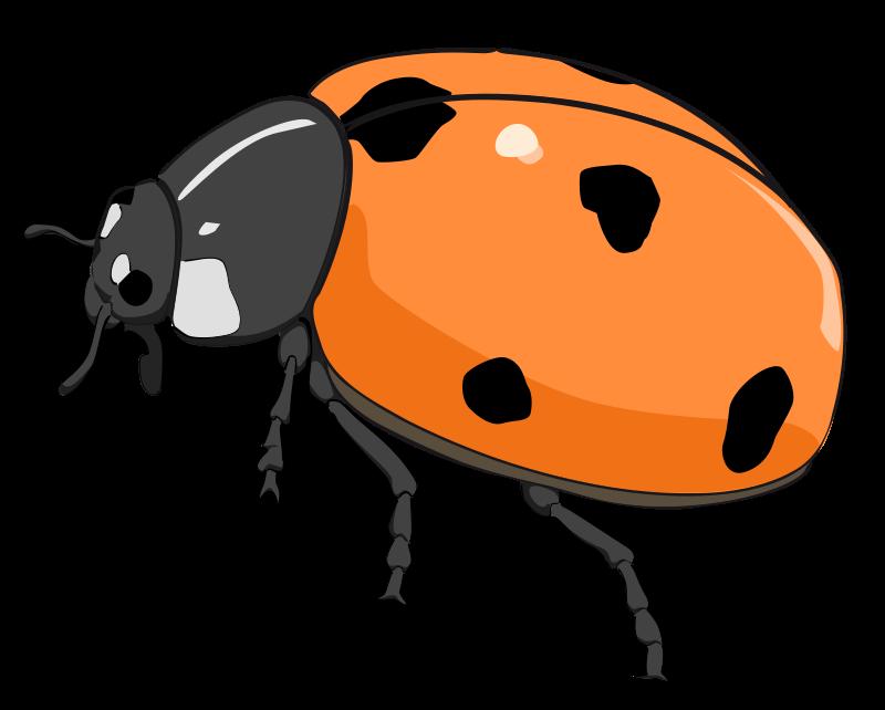 800x642 Ladybug Lady Bug Clip Art Bug Flower Leaf Branch Clipart Personal
