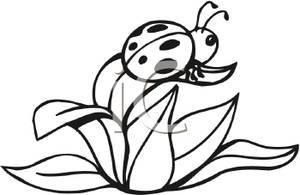 300x195 Art Image Black And White Ladybug On A Leaf