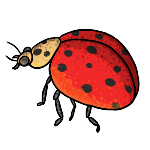 500x500 Clip Art Ladybug Clipart