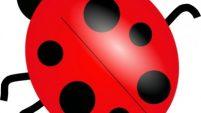 201x113 Ladybug Clip Art Free Printable