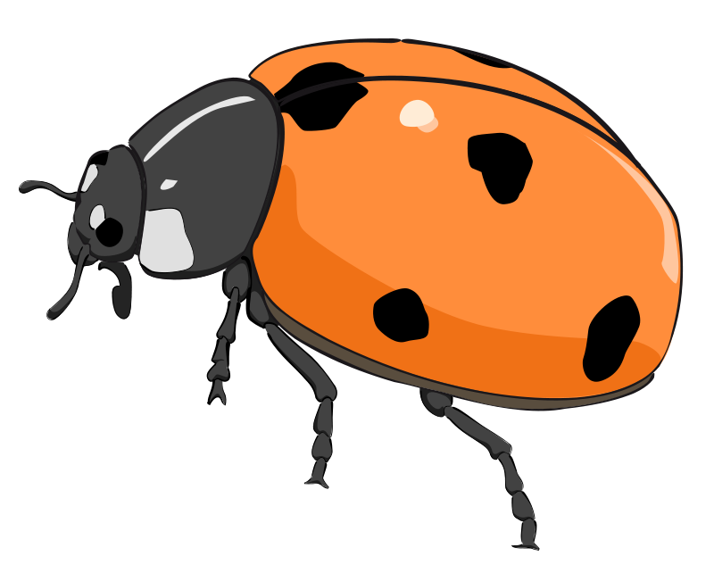 800x642 Free Orange Ladybug Clip Art