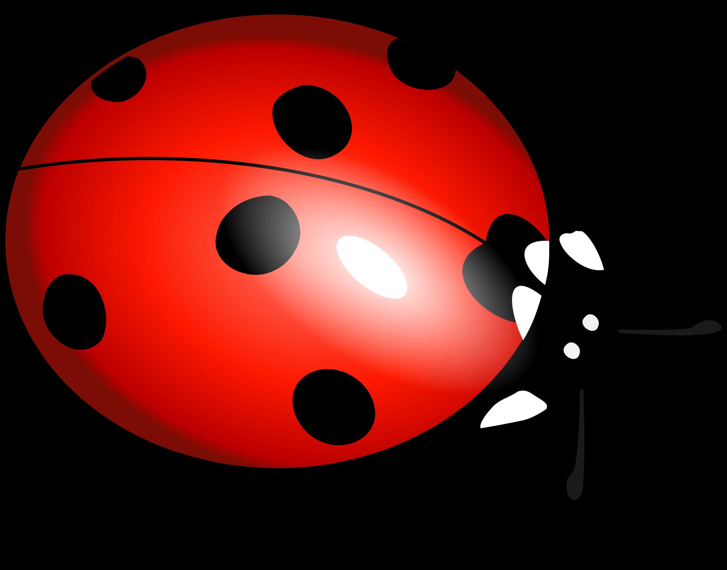 2400x1882 Lady Bug